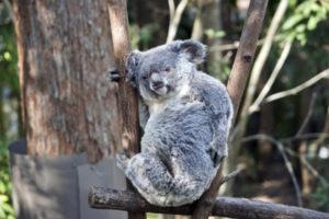 オーストラリアでアトピー