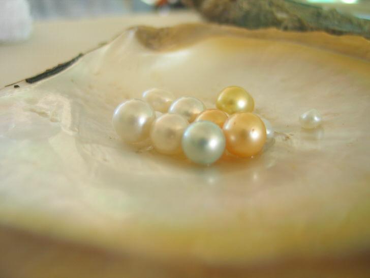 オーストラリア 真珠養殖 金曜島